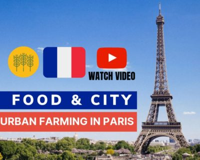 Food and the City: Urban farming in Paris