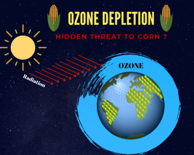 Is ozone depletion hidden threat to corn?