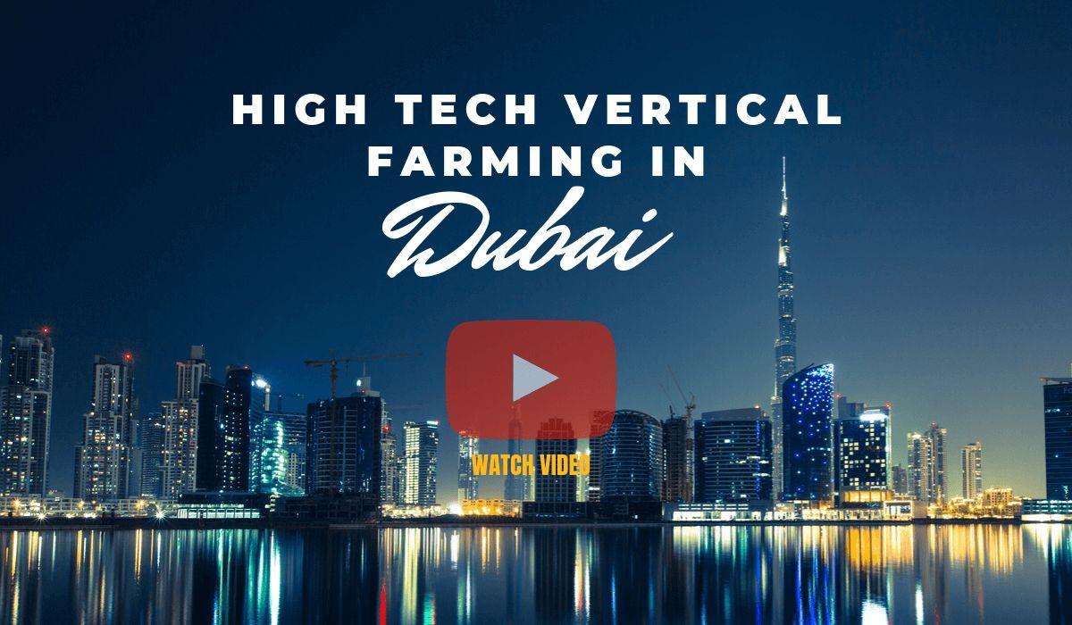 High tech vertical farming in Dubai