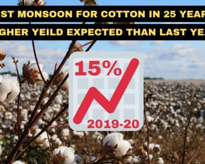 Best monsoon for cotton in 25 years. Yield may strike by 15% than last year