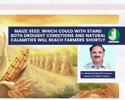 Maize seed, which could withstand both drought conditions and natural calamities, will reach the farmers shortly.