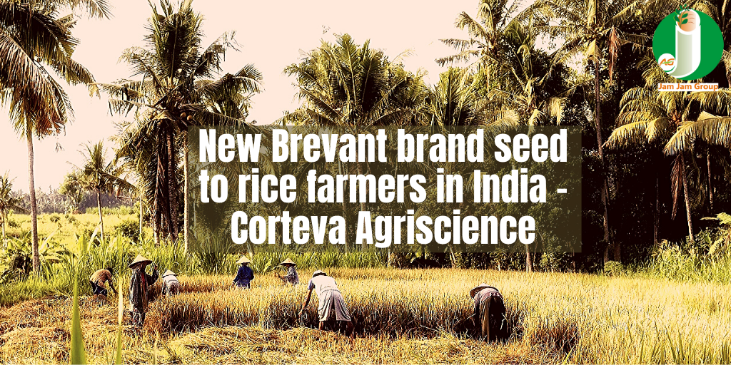 New Brevant brand seed to rice farmers in India – Corteva Agriscience