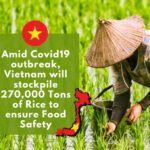 Amid Covid19 outbreak, Vietnam will stockpile 270,000 Tons of rice to ensure food safety.
