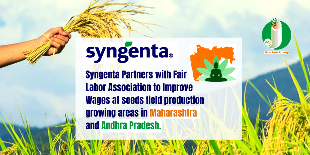 Syngenta Partners with Fair Labor Association to Improve Wages at seeds field production growing areas in Maharashtra and Andhra Pradesh.